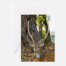 Male chital deer Greeting Card