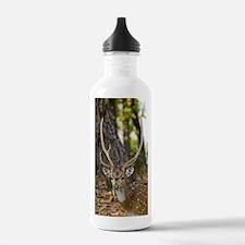 Male chital deer Water Bottle
