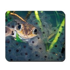 Male frog and spawn Mousepad