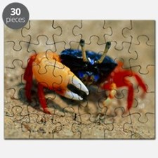 Male fiddler crab Puzzle