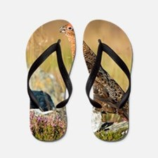 Male red grouse calling Flip Flops