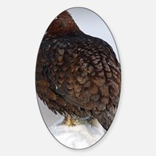 Male red grouse calling Sticker (Oval)