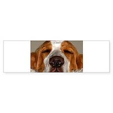 Basset Hound Bumper Car Sticker
