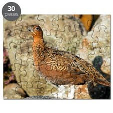 Male red grouse Puzzle