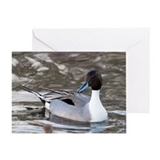Male pintail Greeting Card
