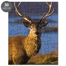 Mature red deer stag Puzzle