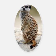 Meerkat Oval Car Magnet