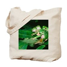 Mating green tree frogs Tote Bag