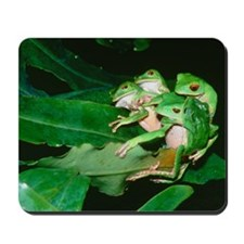 Mating green tree frogs Mousepad