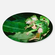 Mating green tree frogs Sticker (Oval)