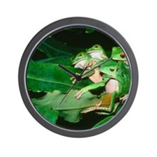 Mating green tree frogs Wall Clock