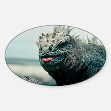 Marine iguana Sticker (Oval)