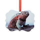Galapagos iguana Ornaments