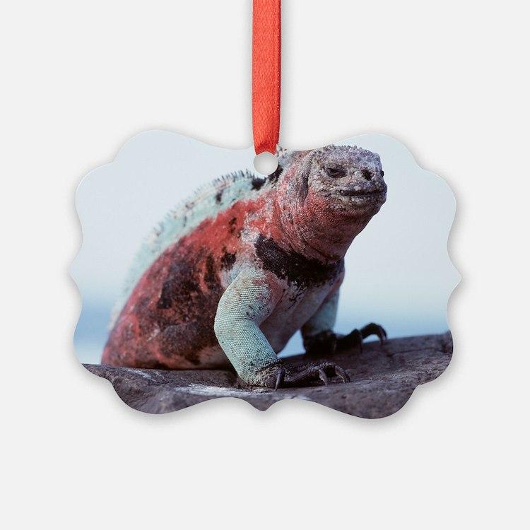 Marine iguana Picture Ornament