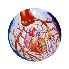 Artwork showing a heart with angina Round Ornament