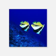 "Masked bannerfish Square Sticker 3"" x 3"""