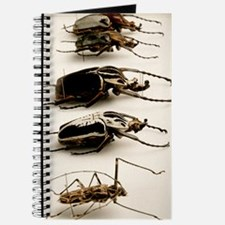 Beetle collection Journal