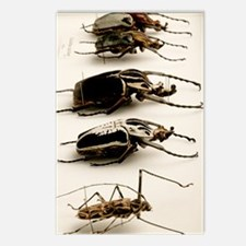 Beetle collection Postcards (Package of 8)