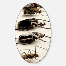 Beetle collection Decal