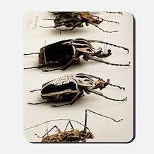 Beetle collection Mousepad
