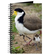 Masked lapwing and chick Journal