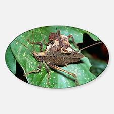 Mating dead-leaf bush crickets Sticker (Oval)