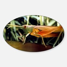Meadow grasshopper, SEM Decal
