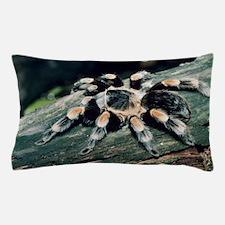 Mexican redknee tarantula Pillow Case