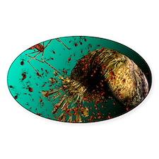 Bacteriophage viruses Decal