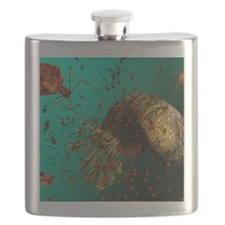 Bacteriophage viruses Flask