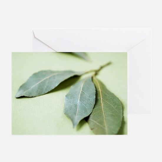 Bay leaves (Laurus nobilis) Greeting Card