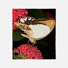 Mocker swallowtail butterfly Throw Blanket