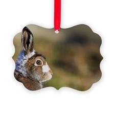 Mountain hare Ornament