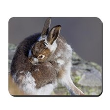 Mountain hare moulting Mousepad