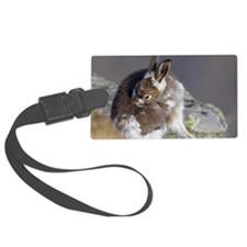 Mountain hare moulting Luggage Tag