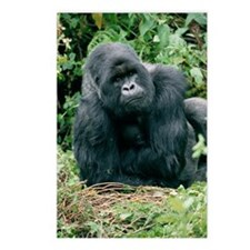 Mountain gorilla Postcards (Package of 8)