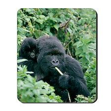 Mountain gorilla and infant Mousepad