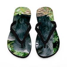 Mountain gorilla Flip Flops