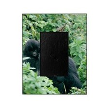 Mountain gorilla and infant Picture Frame