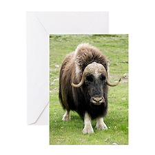 Muskox Greeting Card