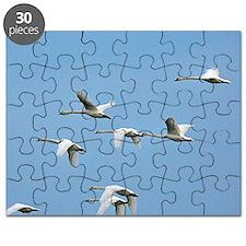 z8280291 Puzzle