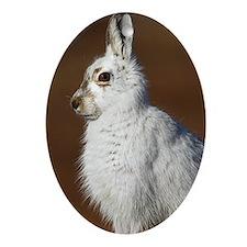 Mountain hare Oval Ornament