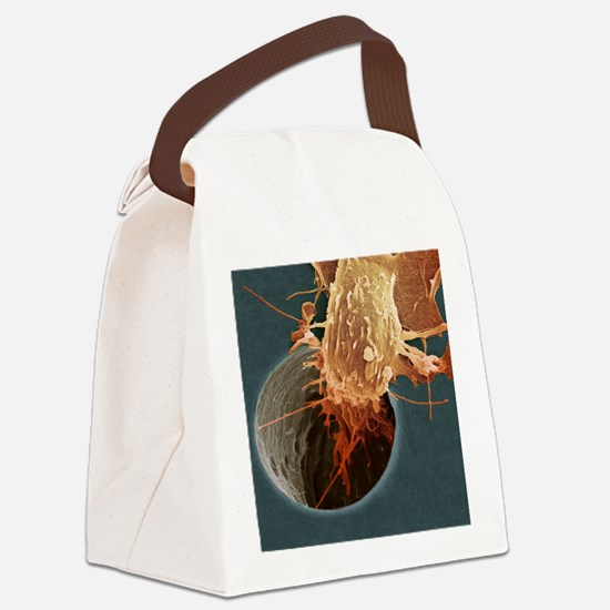 Cancer cell migrating, SEM Canvas Lunch Bag