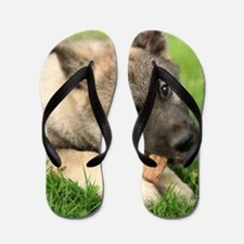 Norwegian elkhound puppy Flip Flops