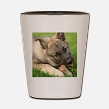 Norwegian elkhound puppy Shot Glass