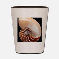 Nautilus shell Shot Glass