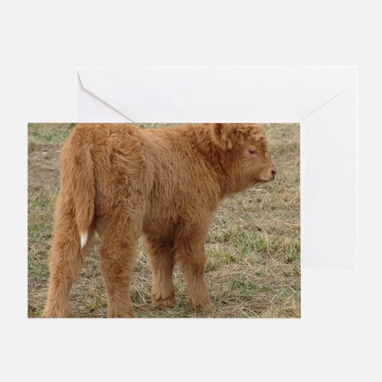 Little White Tail Greeting Card