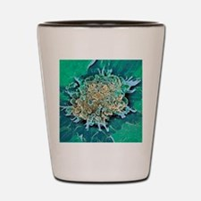 Cancer cell apoptosis, SEM Shot Glass