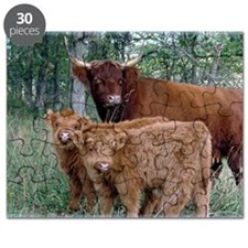 Two highland calves with mama cow Puzzle