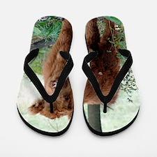 Highland Calf  Flip Flops